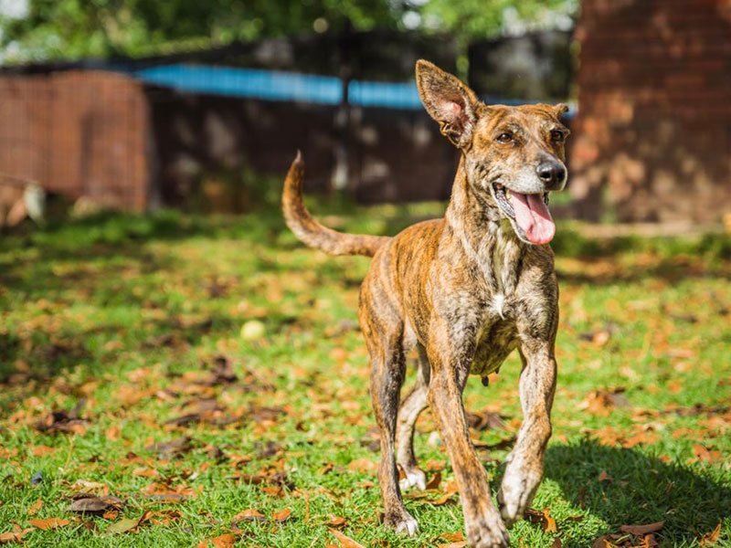 Pretoria Dog Rescue | Help stray, neglected, abused, homeless and