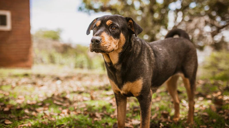 Pretoria Dog Rescue   Help stray, neglected, abused, homeless and
